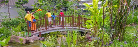 Terrace and rood gardens and therapeutic green spaces provide for calming surroundings at Khoo Teck Puat Hospital that soothe and rejuvenate. The citrus and edible gardens also provide an organic source of herbs and spices for the hospital's garden.